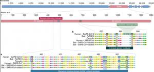 منشا-ویروس-کرونا-آیا-کووید19-در-آزمایشگاه-بوجود-آمده-است؟