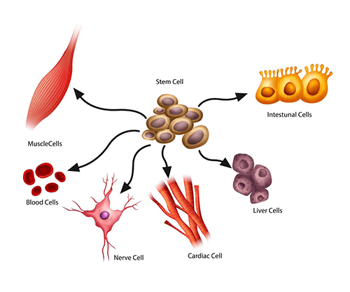 سلول بنیادی-تمایز سلول بنیادی-بیوانفورماتیک